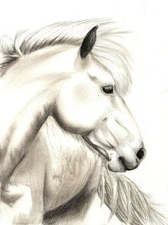 realistic horse sketch by jennypip traditional art drawings animals ...