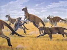 Australian marsupial lion and short-faced kangaroo