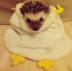 In 2006, McDonald's in the U.K. changed the McFlurry to a hedgehog-friendly design. | 20 Enchanting Facts About Hedgehogs