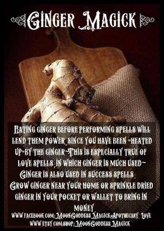 ginger root - magical root - pagan - witch - Pinned by The Mystic's Emporium Magic Herbs, Herbal Magic, Witch Spell, Pagan Witch, Witch Herbs, Magick Spells, Hoodoo Spells, Healing Spells, Gypsy Spells