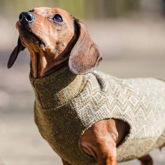 zig zag jumper for dachshunds by redhound for dogs | notonthehighstreet.com
