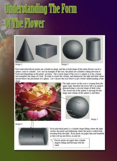 7 Top Flower Painting Tips Acrylic Painting For Beginners, Acrylic Painting Techniques, Painting Lessons, Painting Tutorials, Painting Tips, Art Techniques, Art Lessons, Flower Petals, Flower Art