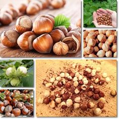 Properties and Benefits of Hazelnuts