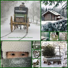 '' Winter Green Whispers  '' by Reyhan Seran Dursun