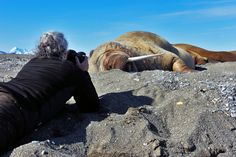 Patiently waiting for the walrus to do something in Svalbard, by Heike Odermatt