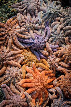 colorful starfish | Flickr - Photo Sharing!