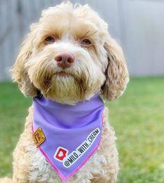 Singapore | Dog Harness | Personalized Dog Bandana | Custom Bowtie Cat Bow Tie, Bandana Bib, Pet Tags, Dog Harness, Dog Accessories, Singapore, Dog Cat, Teddy Bear, Pets