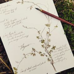 thegreenwoodtree:  oakandhawthorn:  First of many.  #the100daysproject on Instagram   Michelle Frances, Oak and Hawthorn   Beautiful work on herbs