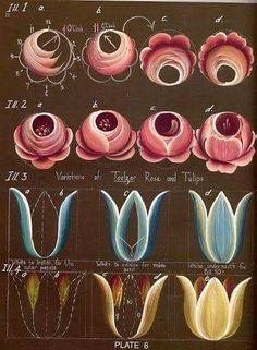 'Variations Of: Taelzar, Roses, & Tulips. - One Stroke - Painting Tutorial Folk Art Flowers, Flower Art, Flower Fairies, Painting Lessons, Art Lessons, Fabric Painting, Painting & Drawing, Rosemaling Pattern, Norwegian Rosemaling