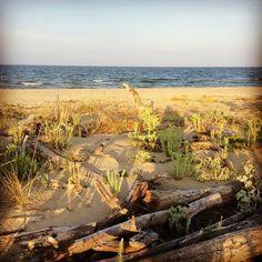 Foce del fiume Bevano: la linea di costa come si presenta al naturale, senza l'intervento dell'uomo. La foce è area protetta e tra i tronchi e tra le dune nidificano specie rare di volatili | MyTurismoER: Ravenna attraverso lo sguardo fotografico di @livingravenna