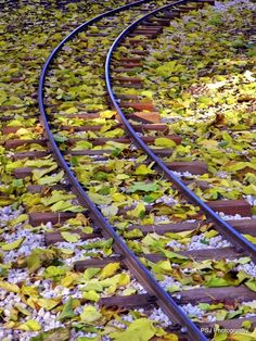 Autumn leaves on the Railroad Track