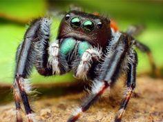 Animales más venenosos de Australia - ten cuidado!