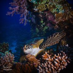Fotografía Red sea colors por Vitaliy Sokol en 500px