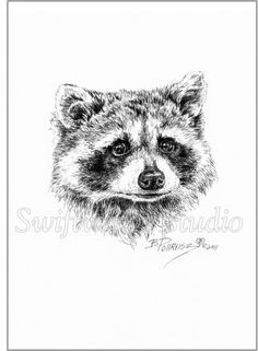 Image result for wildlife pen and ink