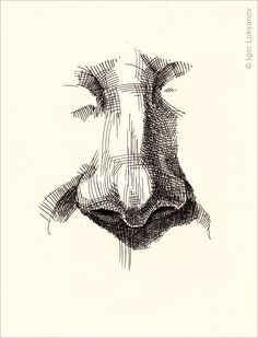 realistic human nose drawing (cross-hatching style)