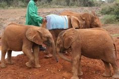 in front shimba left and lempaute right  behind them sinya left and lesanju right dswt nursery okt.2007
