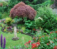 Acer boarders Beautiful Flowers Garden, Beautiful Gardens, Acer Garden, Boarders, Outdoor Decor