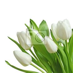 """Tableau ou Poster """"feuillet, éclatant, estival - tulipes blanches bouquet"""" ✓ Un large choix de matériaux✓ 365 jours pour le renvoi du produit sans indiquer la cause✓ Regardez des opinions de nos clients !"""