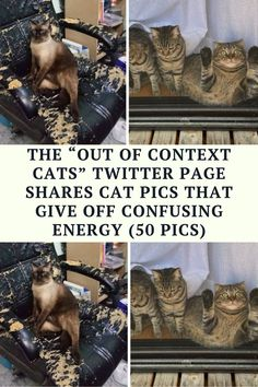 We love going back to our roots, so we're showcasing wholesome, cute, and funny cat photos today.