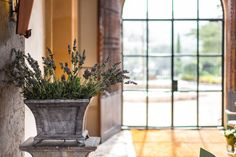 We offer you our long life experience of staying on the island of Mallorca, we will arrange your stay to fit you perfectly and manage all neccessary services at your convinience. Gran Hotel, Island, Plants, Majorca, Islands, Plant, Planets