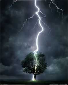 Tree versus Lightning