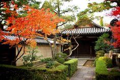 霊雲院:境内の紅葉 - interesting use of a low hedge which is something we could do to delineate the front path.