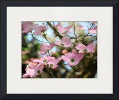 """OFFICE ART Dogwood Tree Pink Dogwood Flowers"" by Baslee Troutman Fine Art Prints, NORTHWEST // <p><b><big>OFFICE ART, DOGWOOD FLOWERS, Corporate artwork, Pink DOGWOOD TREES, Professional Office art, SPRING FLOWERS, FLOWERING TREES, Art Prints, Canvas Art, Framed Artwork, Greeting Cards, Spring Flowers Blooming Landscapes, Botanical Nature Artwork, Blue Skies. </big><b... // Imagekind.com -- Buy stunning fine art prints, framed prints and canvas prints directly from independent working…"