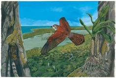 Illustration of Dubois's kestrel (Falco duboisi) - extinct 1674 - hunting a Manapany day gecko (Phelsuma inexpectata) (left,on trunk),while grey tomb bats (Taphozous mauritianus) (left,below) roost in. Extinct Birds, Kestrel, Prehistory, Birds Of Prey, Nature Pictures, Pet Birds, Hunting, Stock Photos, Falcons