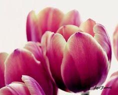 Tulips Photography, Purple Yellow Flowers, Nature Photography, Botanical Print, Summer Art, Purple Wall Art