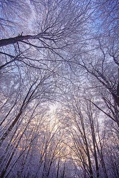 Hoar Frost Canopy
