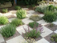 Herb garden planted checkerboard paving stones. Xeriscaping idea - extra heat from stones, little evaporation of water.