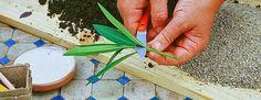 Le calendrier des boutures des Jardiniers Professionnels, complet pour vous aider à savoir quand bouturer et repiquer vos végétaux, mois par mois.