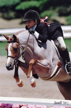 Miss Australia, a legend in the small pony hunter ring.