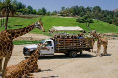 African Safari at San Diego zoo. We fed the giraffes & a rhino San Diego Vacation, San Diego Travel, San Diego Zoo, California Vacation, California Dreamin', Places To Go, Places To Travel, San Diego Houses, America's Finest
