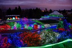 Zoolights at Point Defiance Zoo & Aquarium Nov 28 - Jan 4 from 5-9pm.  Military Mondays Discount December 1, 8, and 15, 2014