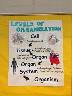 cells to organisms hierarchy   General Biology BI 101 - Structure ...