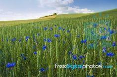 Luv summer flowers