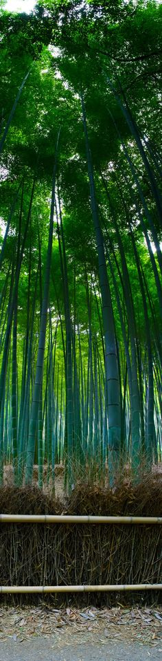 Bamboo Forest