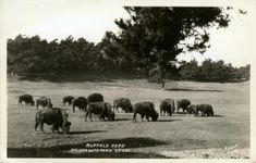 vintage Golden Gate Park | Official Photographer, Yellowstone National Park.""