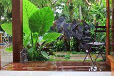 tropical garden style
