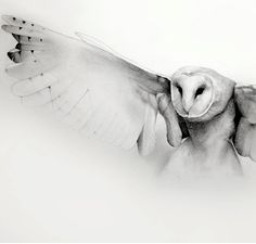 flying barn owl pencil drawing art print by TheHauntedHollowTree,