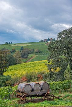 De Ponte Cellars - Dayton Oregon - Oregon, in my mind, stands just as beautiful in wine country as Italy or France. Sauvignon Blanc, Cabernet Sauvignon, Dayton Oregon, Dundee Oregon, Beautiful World, Beautiful Places, Emilia Romagna, Barris, Oregon Wine Country