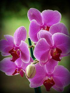 Purple Orchids - Stunning Photo