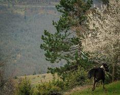 Horses at Grevena district Creatures, Horses, Nature, Travel, Naturaleza, Viajes, Destinations, Traveling, Trips