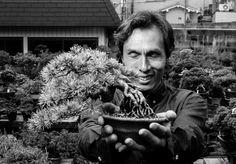 #Bonsai #Gardener in #Japan with an Japanese white pine, #Shohin