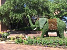 To see a variety of topiary designs, check out the South Carolina Festival of Flower during the month of June.
