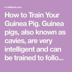 How to Train Your Guinea Pig. Guinea pigs, also known as cavies, are very intelligent and can be trained to follow simple commands and do tricks. To ensure the training goes smoothly and properly, make sure you take good care of your...