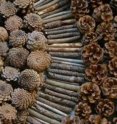 Joel Allen macedonia pine cones