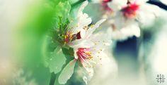 Primavera by Just-Black.deviantart.com on @deviantART