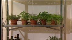 Kräuter anbauen in der Wohnung: Tipps und Tricks - SAT.1 Ratgeber